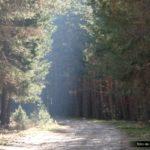Llegamos de nuevo a una pista entre el bosque