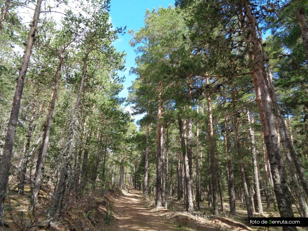 Siempre pedalearemos entre el bosque