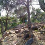 Sendero hacia el Arenal y el Mirador