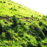 Y seguimos subiendo entre las faldas de la montaña cubiertas por una verde pradera