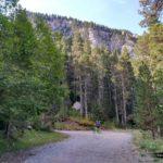 El bosque de pino negro ante las montañas crea una estampa preciosa