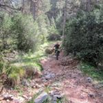 Zona con un salto y algunas raices del sendero