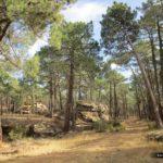 Iniciamos la subida ya por el Paisaje Protegido de los Pinares del Ródeno