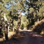 Camino de la Mosquera por el que volvemos a Ahín
