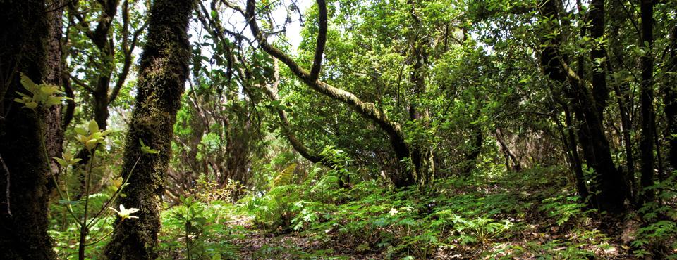 El Pijarral en el Parque natural de Anaga