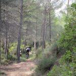 Bajada por la Linea de El Barranc