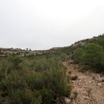 Superamos un duro tramo de sendero para tomar el cinto superior de regreso a cortes