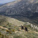 Sendero de bajada hacia Famorca