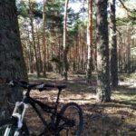 Siempre rodeados por un inmenso bosque de pino negral