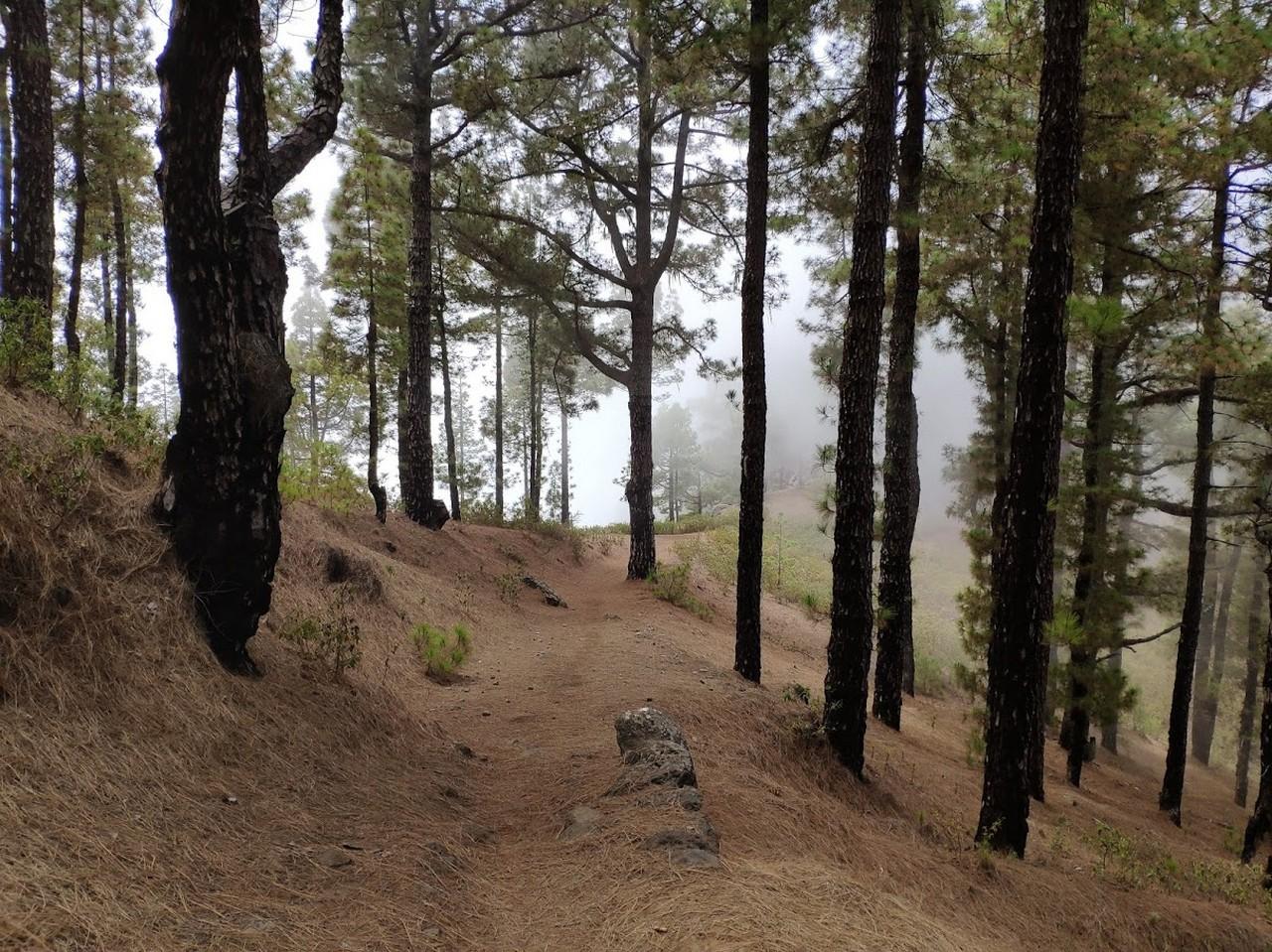 Entramos en un sector ya arbolado, con mucha hoja de pino y con la niebla rodeándonos