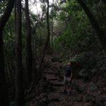 Tramo de escaleras entre el bosque