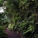 La vegetación de Laurisilva es impresionante