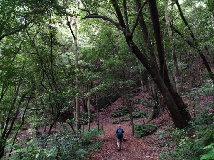 Nacientes de Marcos y Cordero – Bosque de los Tilos