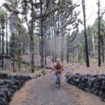 Tramo inicial de la ruta de los volcanes por la pista entre las pinadas