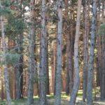 El bosque en maýusculas
