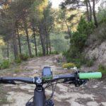 La pista transcurre entre una bonita pinada junto a una zona minera