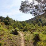 Senda haciael Arroyo de Barcelón