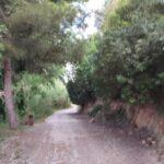 El camino hasta La Vallesa siempre es por pista en muy buen estado