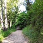El sendero en esta primera parte es muy tranquilo y bonito
