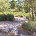 Camino de Bajada hacia el mirador de la Rambla de Alcotas