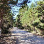Incluso por carretera siempre vamo entre grandes pinadas