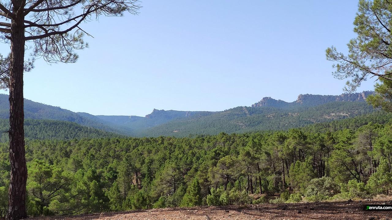 Preciosas vistas del inmenso pinar
