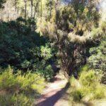 Inicio de la senda hacia la Cascada de Bercolón