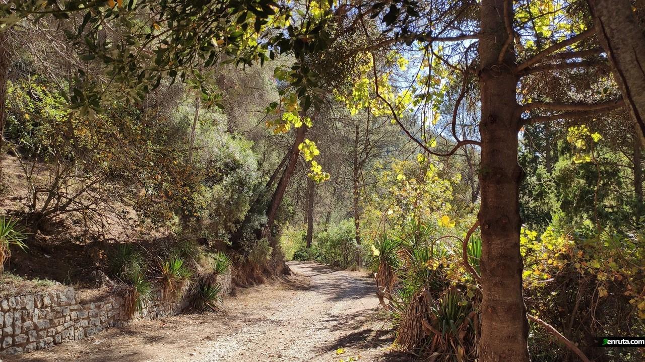 El camino está precioso en otoño