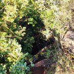 La entrada a la Cova del Colom está bastante escondida