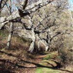 El sendero hacia Vallanca es precioso