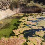 Balsa para la reintroducción de anfibios