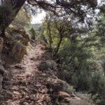 Sendero que baja a la Cascada del Río Carbó