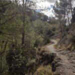 Sendero que nos lleva en altura junto al río Carbó
