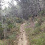 Final de la senda de las Colmenas