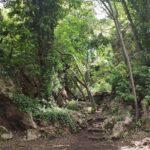 La selva meditarrànea