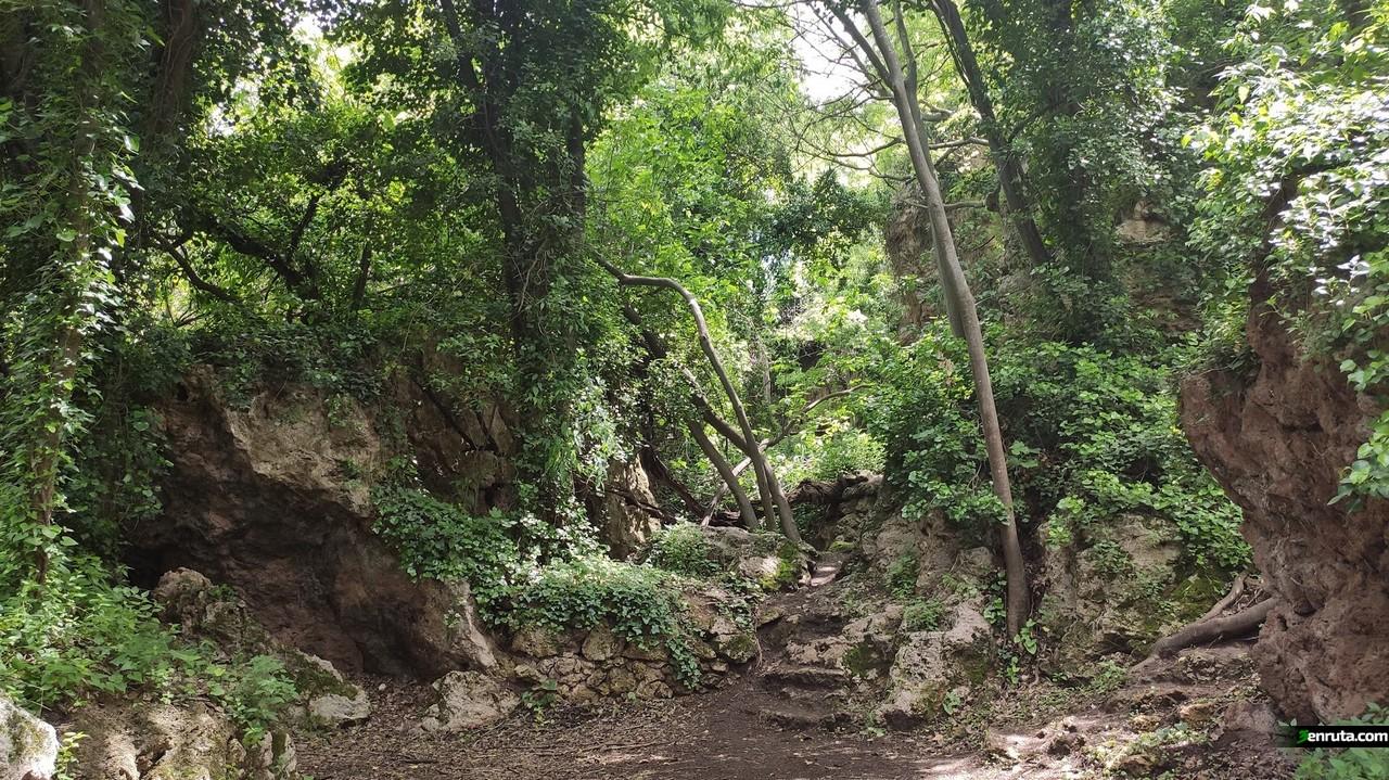 La selva mediterrànea