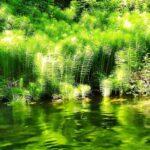 El agua y la vegetación dibujan escenas fantásticas